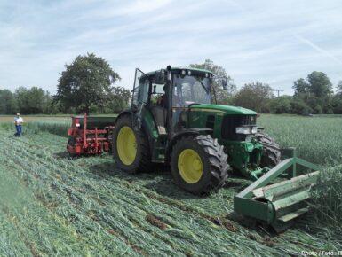 Développer des outils pour améliorer la compétitivité de la production de fruits et légumes biologiques de la région du Rhin supérieur