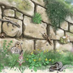 Expérience nature sans frontières : Création, découverte et conservation de biotopes