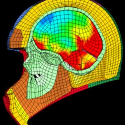 HNBi: Biomécanique du système crânio-encéphalique et cervical