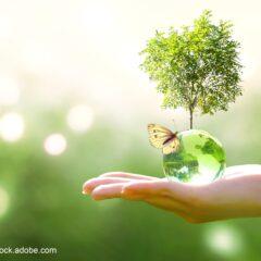 Impact environnemental du programme Interreg Rhin Supérieur 2021-2027 : donnez votre avis !