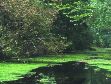 Vis-à-vis Huningue - Weil am Rhein : Un nouvel espace vert transfrontalier